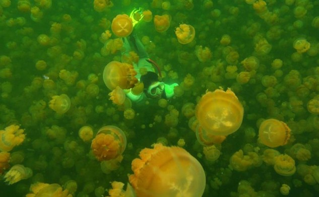 Jellyfish lake@Palau