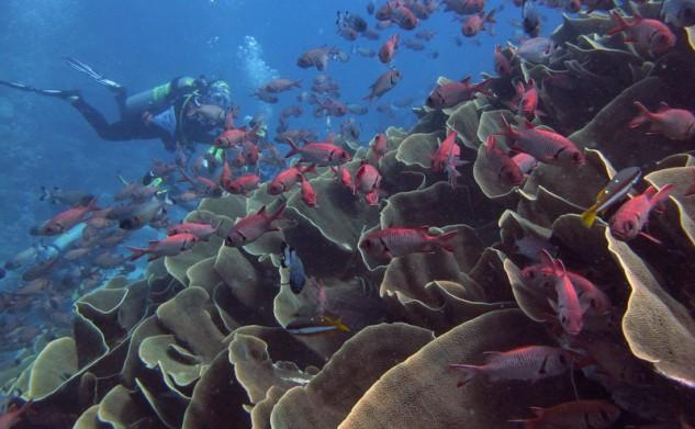 Scuba diving@Palau 1