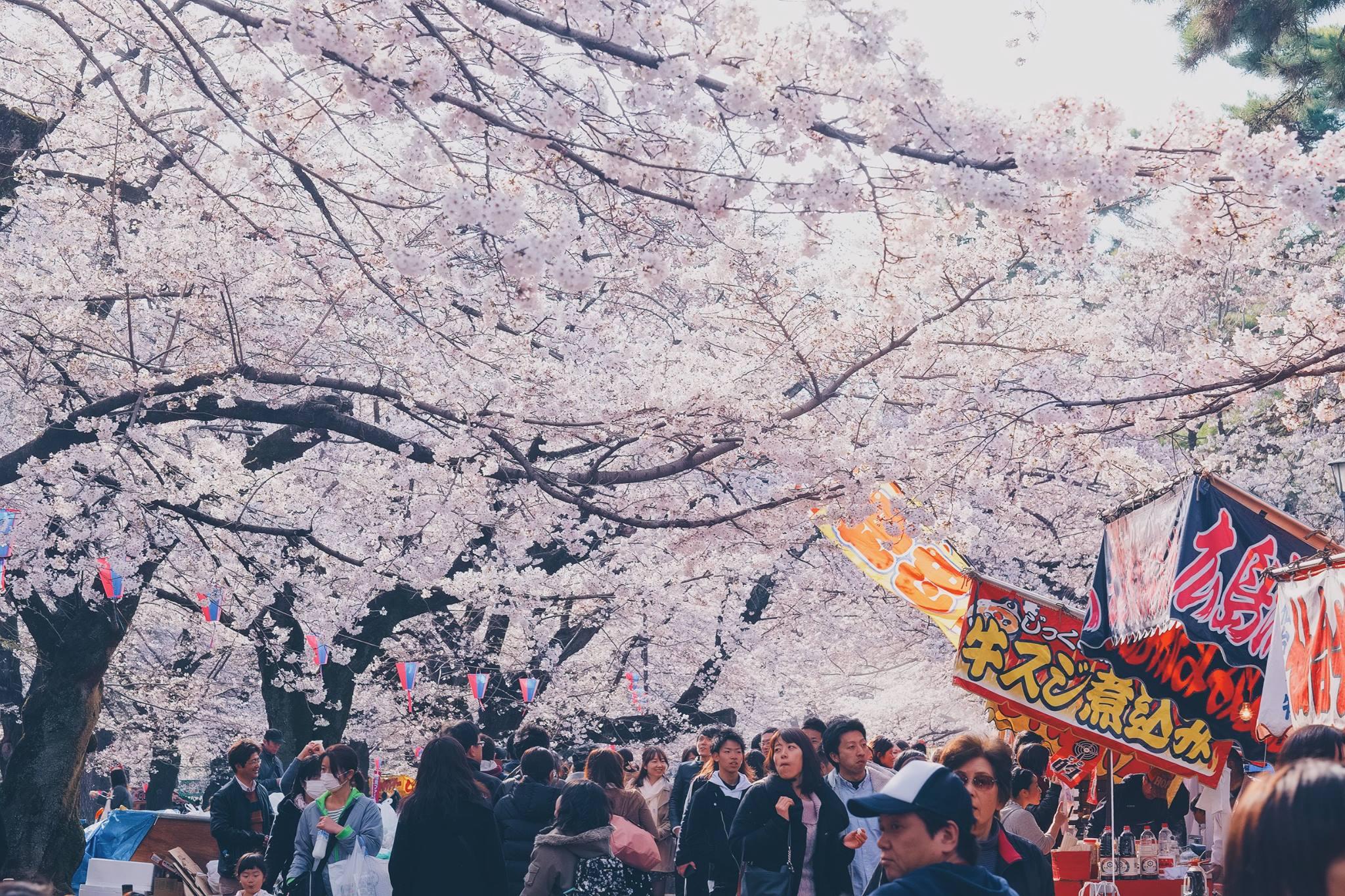 Hanami Festival @ Omiya Park