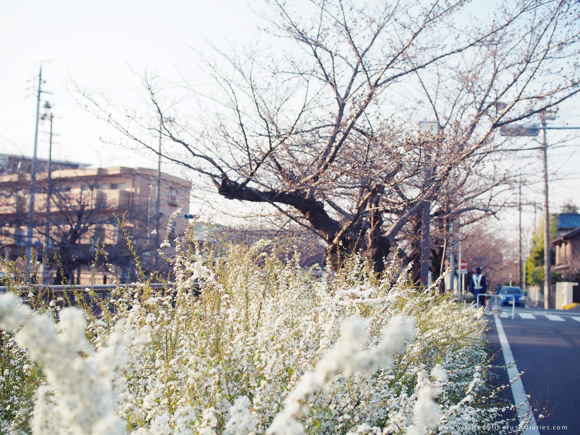 Yamazakigawa Riverside